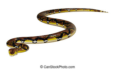 python, reticulated, witte