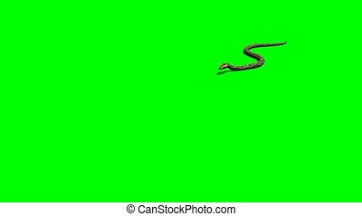 python snake attack - green screen