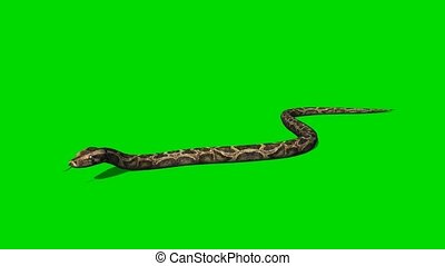 Python Snake crawls - green screen