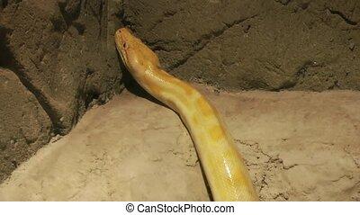 Python Snake Moving