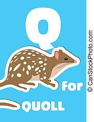 q, alphabet, quoll, tier