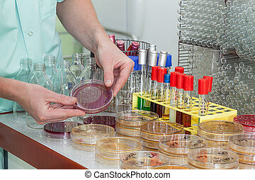 químico, trabalhando, bactérias