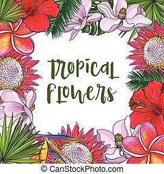 quadrato, foglie, tropicale, palma, fiori, cornice