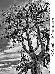 quadro, dramático, árvore., morto