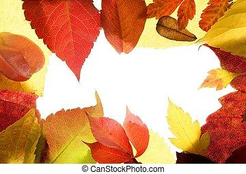quadro, folhas, outono, estúdio, branca, sobre