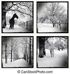 quadro, jogo, inverno, monocromático