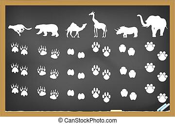 quadro-negro, pegadas, animais