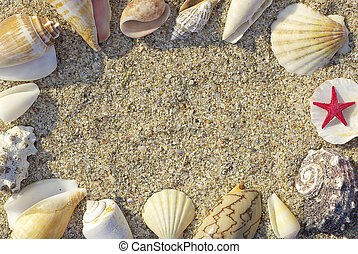 quadro, praia, conchas