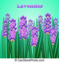 quadro, text., lavanda, elegante, vetorial, flores, cartão