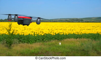 quadrocopter flying near the field of sunflowers.