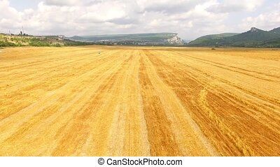 Quadrocopter quickly flies over the field, below harvesting