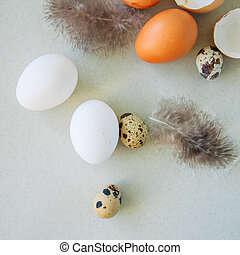 Quail and hen eggs on a gray background. Top view and square image