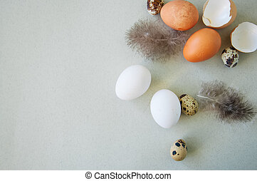 Quail and hen eggs on a gray background. Top view.
