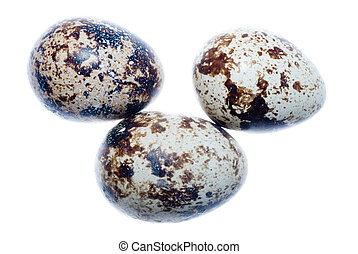 quail bird egg isolated