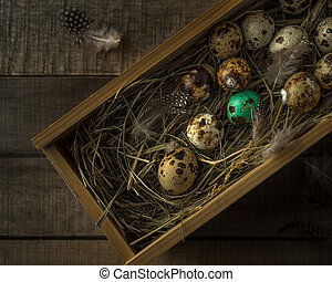 Quail Easter eggs in wooden box, one painted, feathers on wooden rustic background, closeup view