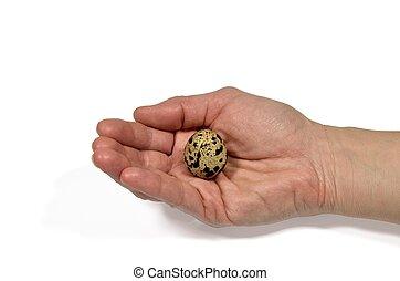 Quail egg in a hand