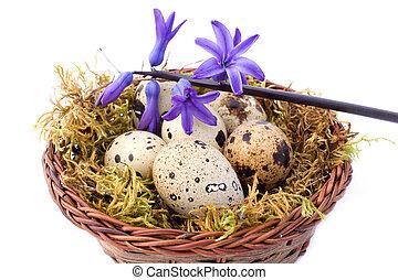 Quail Eggs And Blue Hyacinth