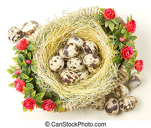 quail eggs are in the nest