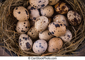 quail eggs in a nest close-up