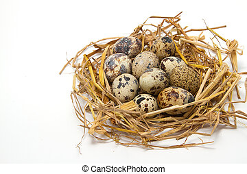 quail eggs in a nest of hay