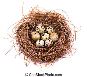 Quail eggs in a straw nest, isolated on white background.
