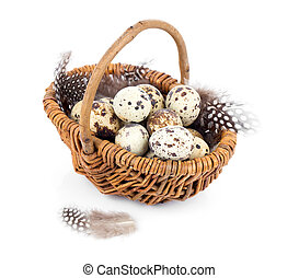quail eggs in a wicker basket on white background