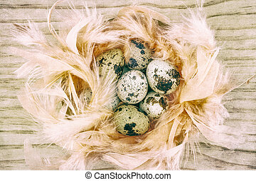 Quail eggs in feather nest