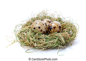 Quail eggs in nest, isolated on white background.
