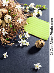 Quail eggs in nest with white flowers on textured black background