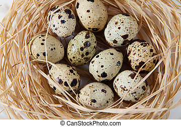 Quail eggs in wooden crate nest