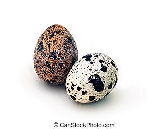 quail eggs, isolated on white