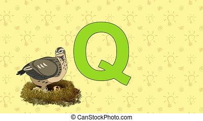 Quail. English ZOO Alphabet - letter Q - Animated English...
