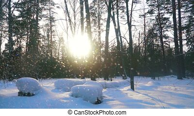 Qualitative slow motion footage of snow among trees at beautiful sunny day, 240 fps.