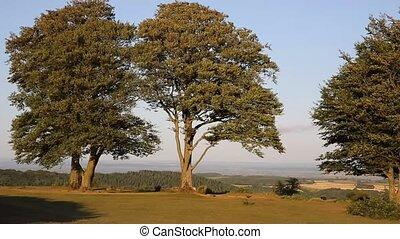 Quantock Hills seven sisters trees