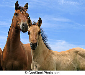 Young foal and a yearling filly