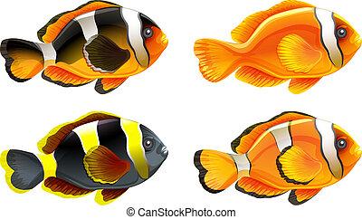 quatre, coloré, poissons