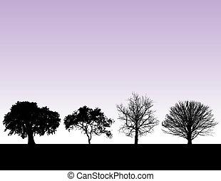 quatre, coucher soleil, arbres