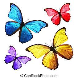 Quatre couleur papillons - Papillon dessin couleur ...