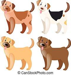 quatre, différent, fourrure, couleurs, chiens