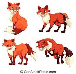 quatre, fourrure, renards, rouges