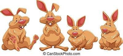 quatre, lapins, fourrure, brun