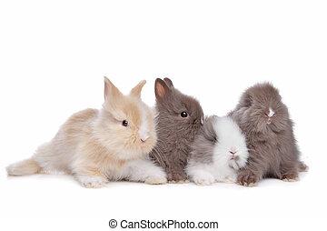 quatre, lapins, jeune, rang