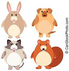 quatre, mignon, types, animaux familiers