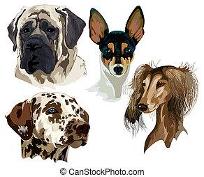quatre, museau, différent, chien, espèces
