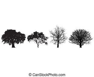 quatre, noir blanc, arbres