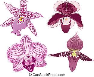 quatre, orchidées