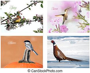 quatre, saison, collage., oiseau