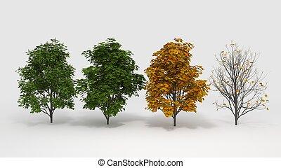 quatre saisons, aesculus, hippocastanum