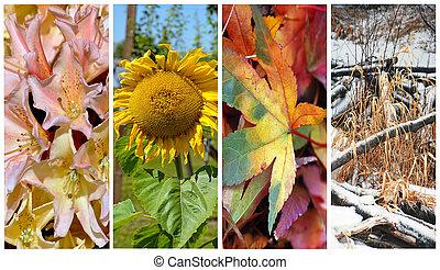 quatre saisons, colloage