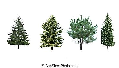 quatro, árvores pinho